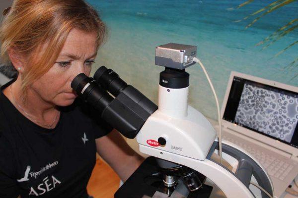Blodanalyse / Mikroskopering